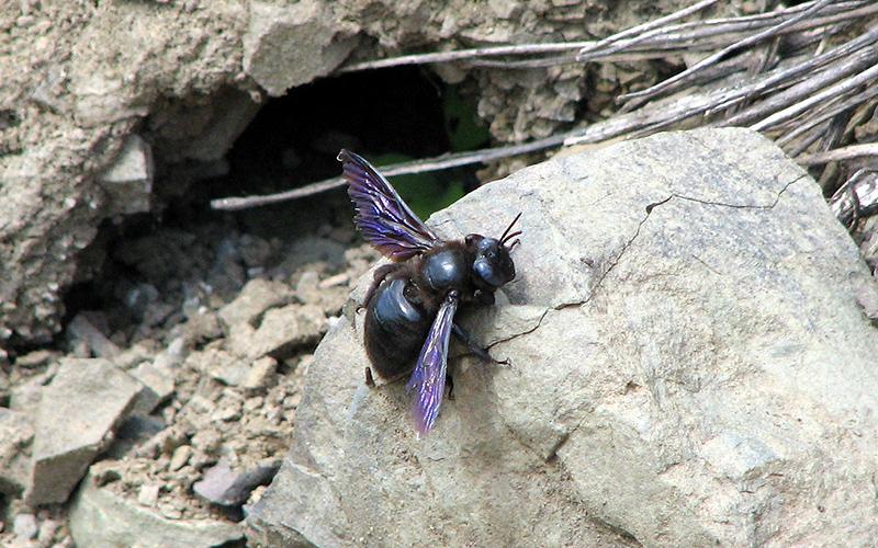 Топ-10 насекомых, занесённых в Красную книгу НСО