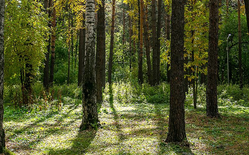 За лес и за дрова