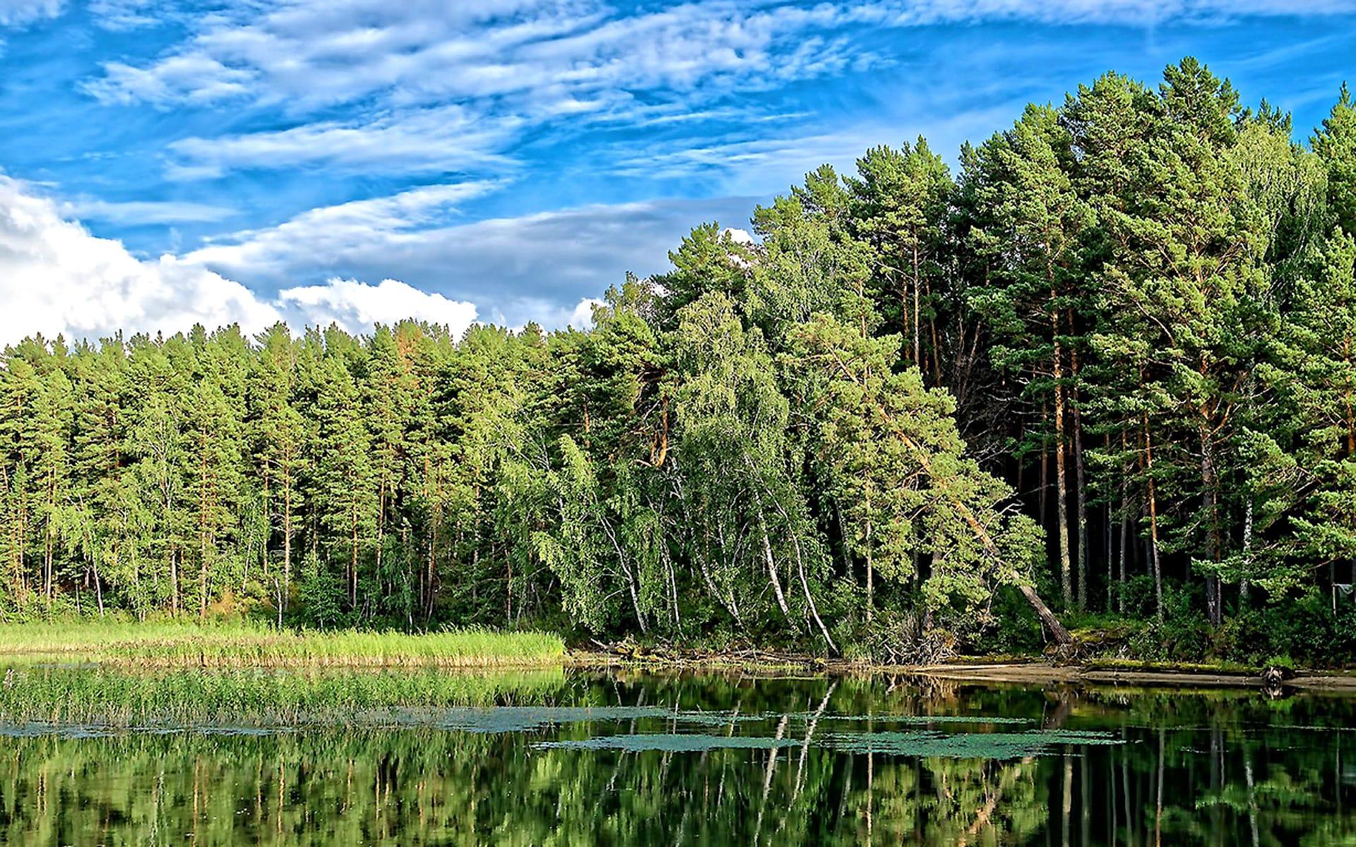 Шервудский лес, сталактиты и краски