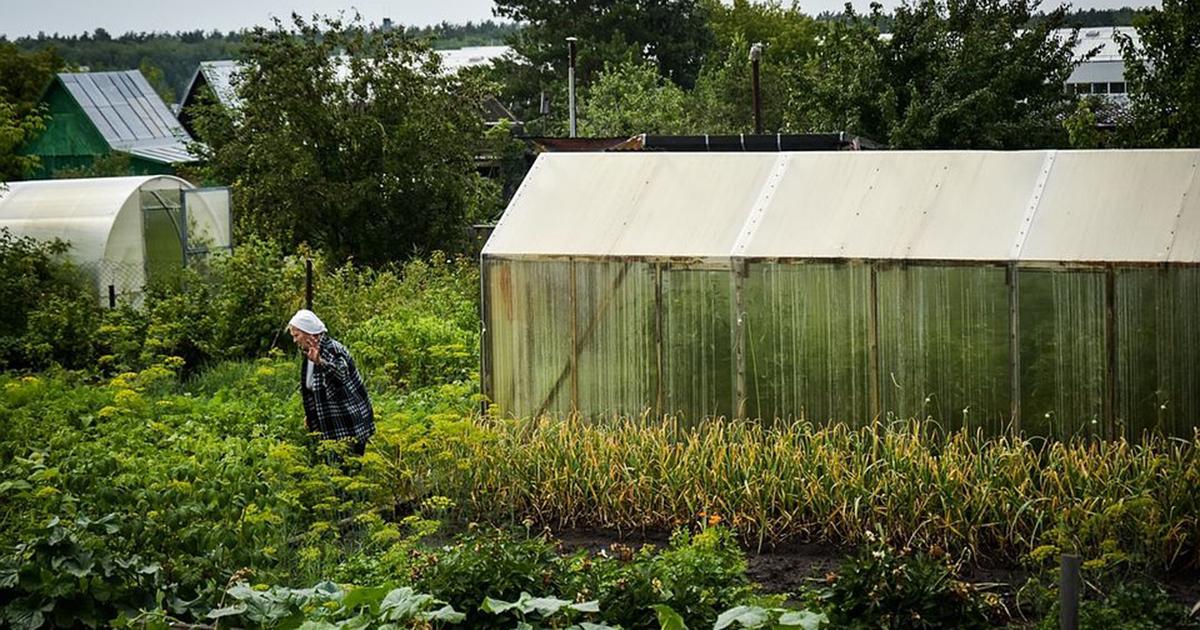 Новосибирцев выгоняют с их дач и не дают собрать урожай