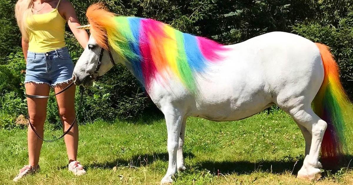 В новосибирском зоопарке появился радужный пони