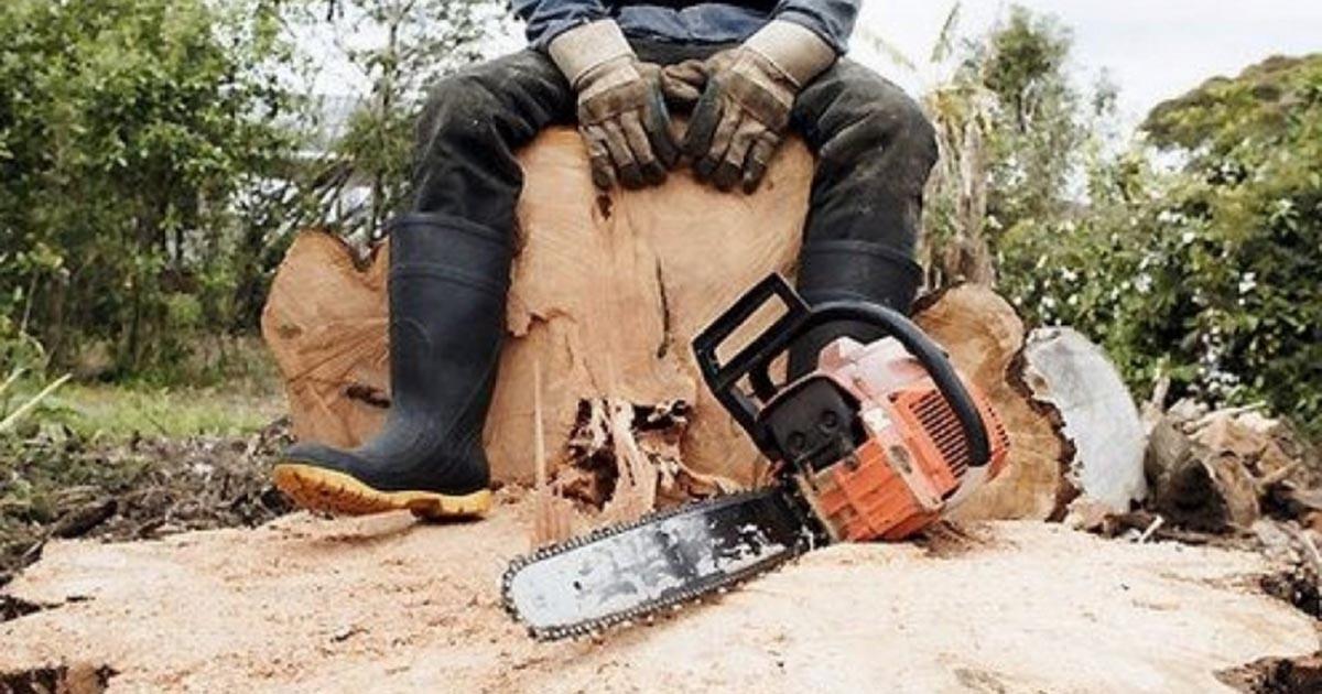 Борьбу с «чёрными лесорубами» усилят в Новосибирской области