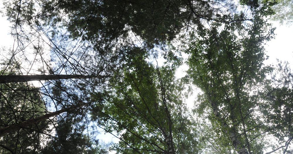 Власти Новосибирской области впервые купили лесопосадочную машину