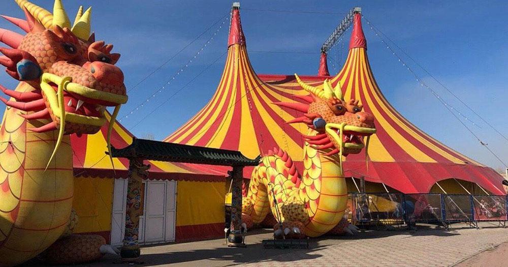 Цирк-шапито решил засудить новосибирскую зоозащитницу