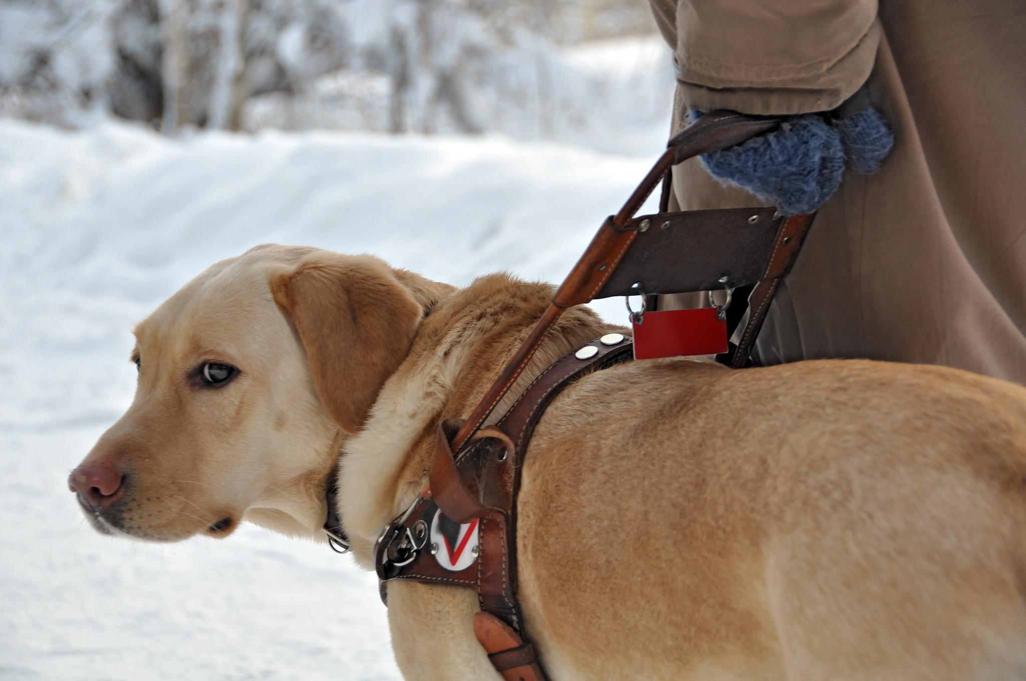Собаки-поводыри нуждаются в поправках к закону о защите животных