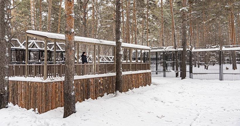 Вольеры без решёток делают в Новосибирском зоопарке