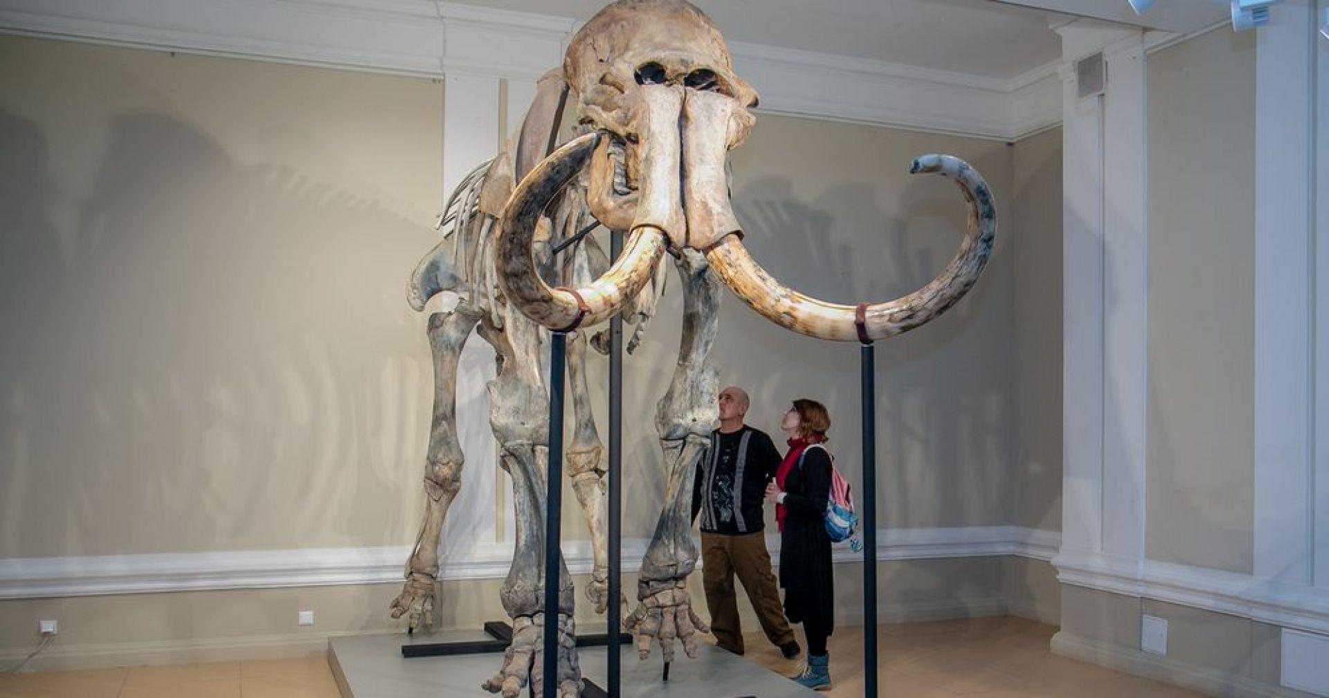 Шерстистому мамонту выбрали имя в новосибирском музее