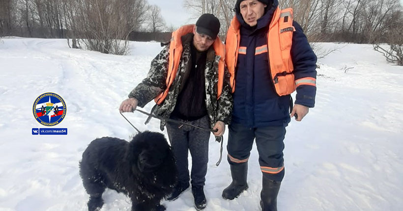 Собака убежала от хозяев и застряла на острове в Новосибирске