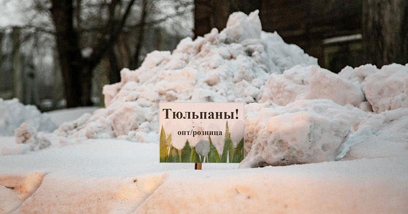 У снега в плену