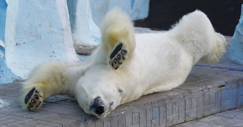 Новосибирский зоопарк изменил режим работы