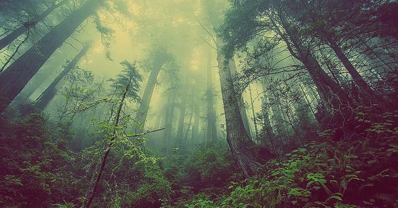 Бесплатный лес – только честным