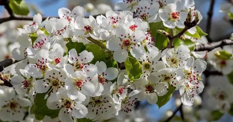 Как в Новосибирской области высадить своё дерево в память о солдатах войны