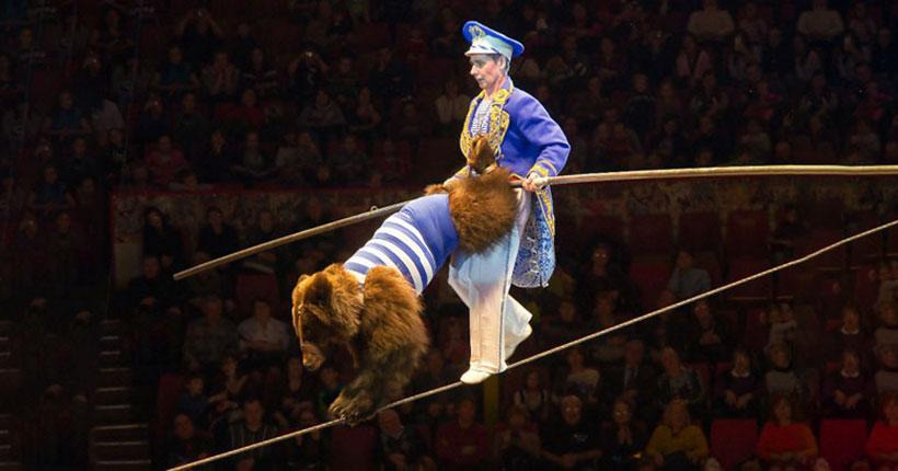 Медведица на канате, рекордсмен Книги рекордов Гиннесса и настоящие амазонки едут в Новосибирск