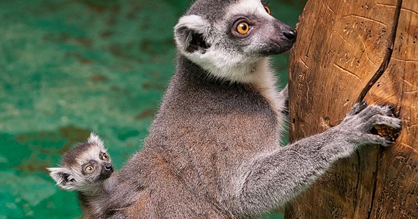 В Новосибирском зоопарке случилось пополнение