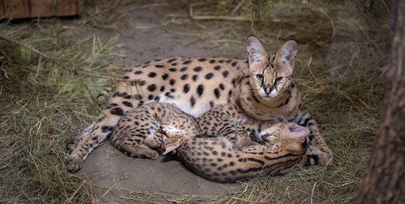 Животные с очень большими ушами: в Новосибирске появились сразу семь особей