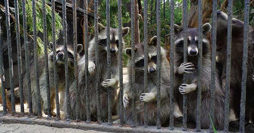 «Впервые в истории»: о своём закрытии объявил зоопарк Новосибирска