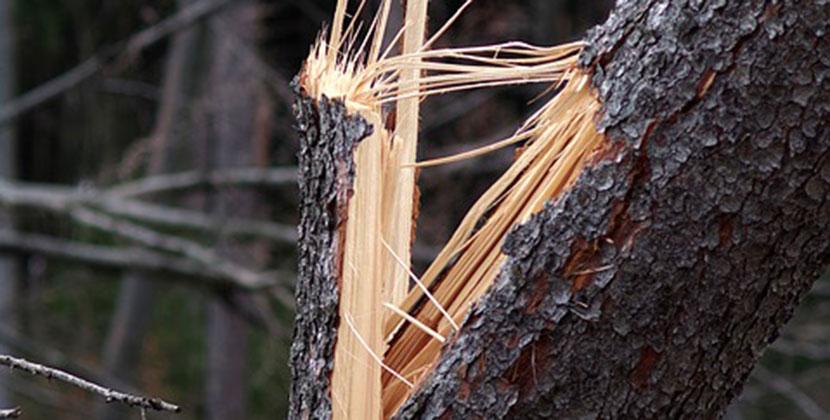В Новосибирской области возможны обрывы проводов и падение деревьев