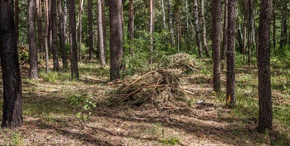 Клещи выходят из лесной подстилки: Новосибирский роспотребнадзор сообщил о начале эпидсезона