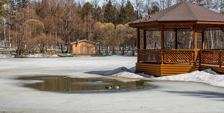 Героические Серые Шейки из Новосибирска пережили зиму на Лебедином озере