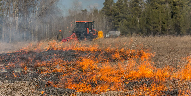 В Новосибирской области начали гореть леса: за неделю огонь поразил 213 гектаров