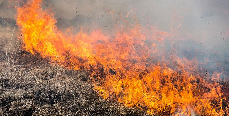 Новосибирцы на пикнике жарили шашлык и устроили огромный пожар