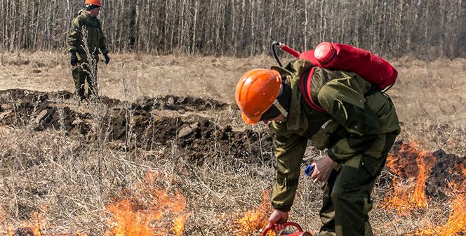 К поджигателям в Новосибирской области применят очень жёсткие меры