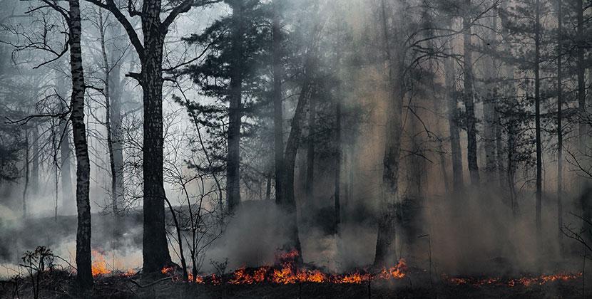 Жителям Новосибирской области запрещено посещать леса