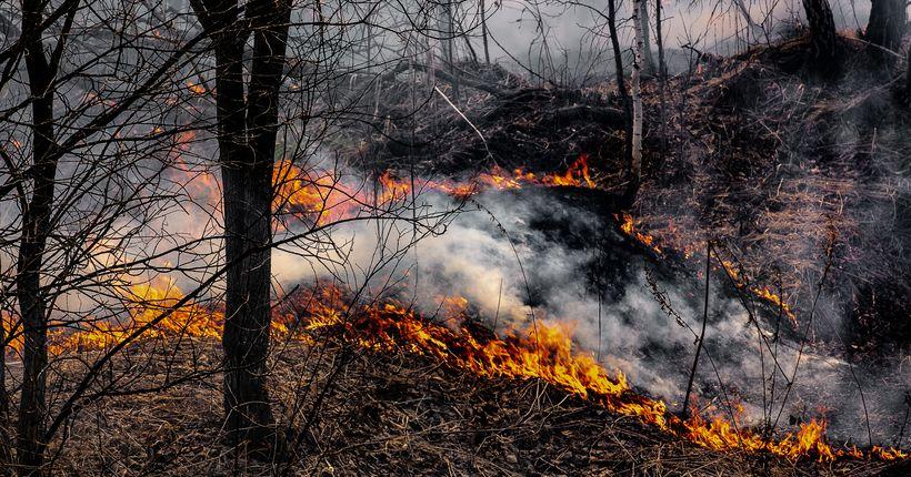 Более полутора десятков новых лесных пожаров возникло в Новосибирской области за сутки