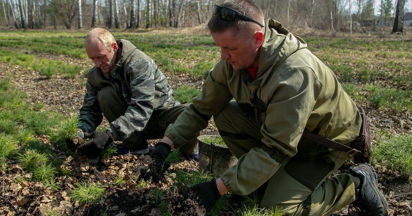 В Новосибирской области планируют восстановить за год столько же лесов, сколько будет вырублено