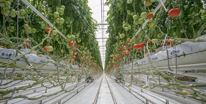 В Новосибирской области будет установлен рекорд по вводу сельскохозяйственных комплексов