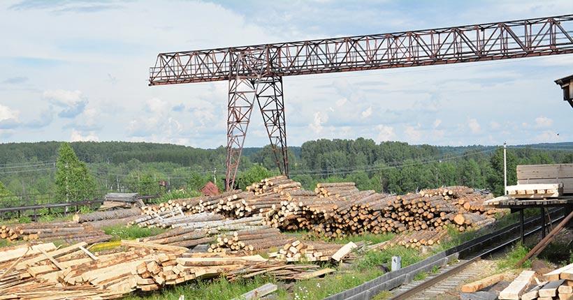 Контроль за древесиной в Новосибирской области введут в законные рамки