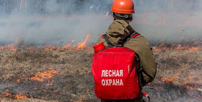 Первое уголовное дело возбуждено против поджигателей в Новосибирской области