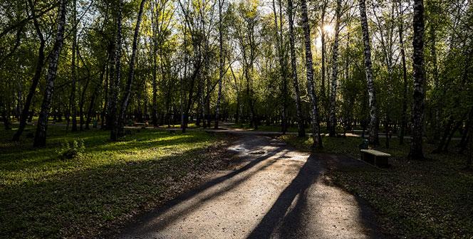 Клещи активизировались в Новосибирской области