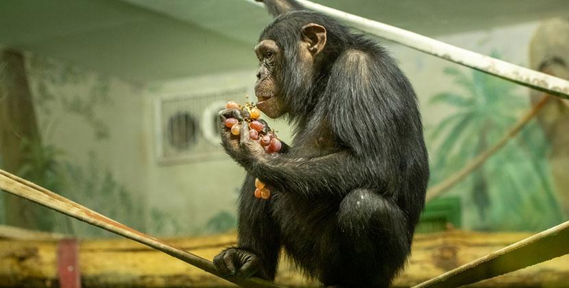 Новосибирский зоопарк просит о помощи жителей региона