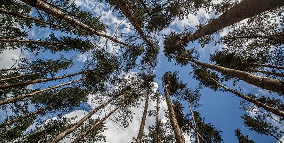 Аномальная жара грозит пожарами лесам Новосибирской области
