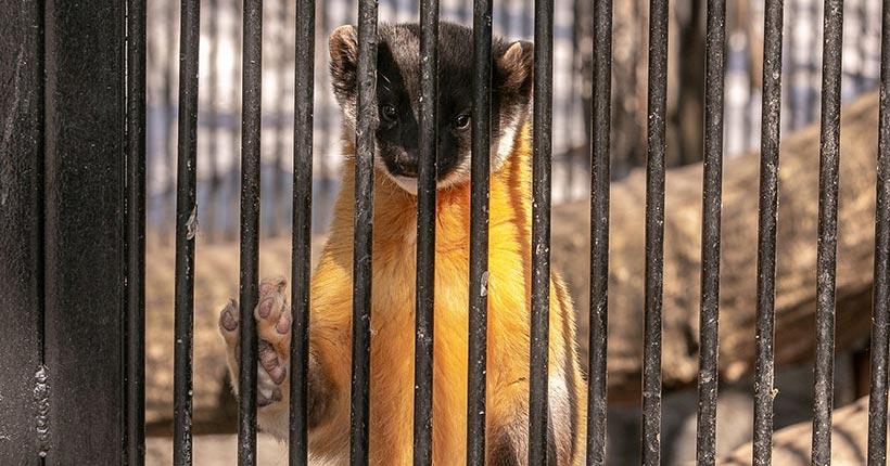 Деньги Новосибирскому зоопарку выделили, но они снова нужны