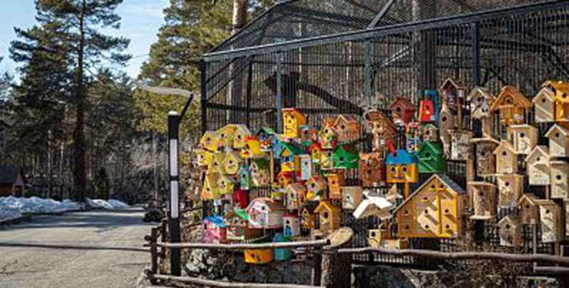 Новосибирский зоопарк пригласил скворцов во дворцы