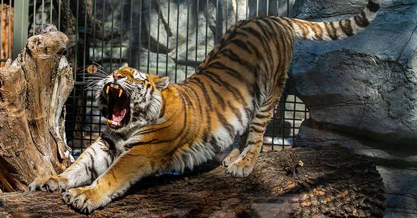Новосибирский зоопарк могут скоро открыть для посетителей