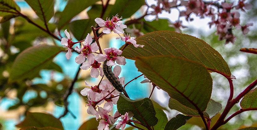 В Новосибирской области даже гусеницы рады выходным, несмотря на ожидаемые грозы