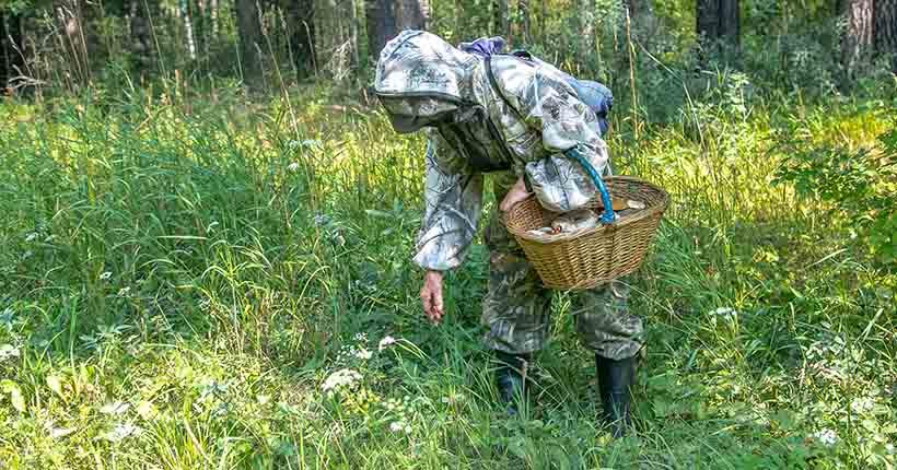 До конца мая Новосибирскую область обеспечат иммуноглобулином