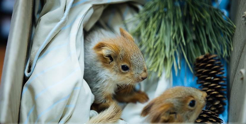 В Новосибирский зоопарк часто приносят детёнышей зверей и птенцов