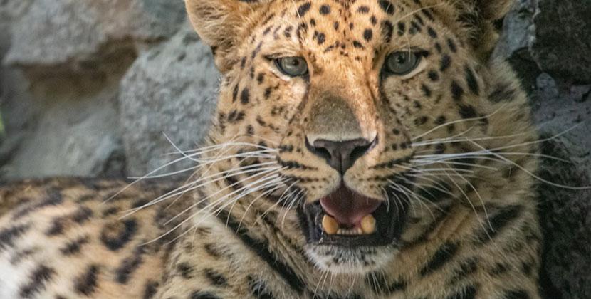 К Кадрону из Новосибирского зоопарка скоро приедет друг