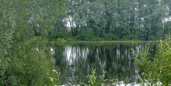 В Новосибирской области снова утонул ребёнок