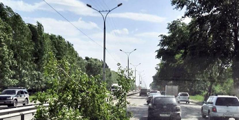 Стихия ломает и крушит деревья в Новосибирской области