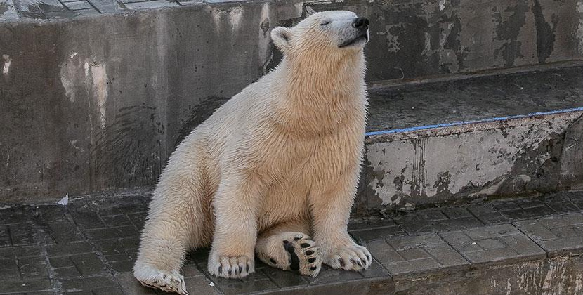 Новосибирский зоопарк предлагает взять животных под опеку