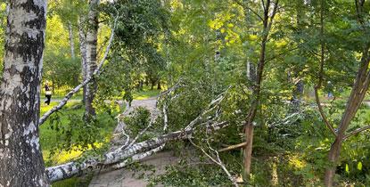 Более пятидесяти тысяч жителей Новосибирской области остались без электричества