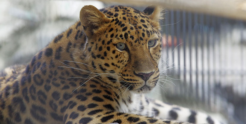 В Новосибирске очень скоро может открыться зоопарк