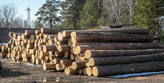 В Новосибирской области появился новый закон об обороте древесины