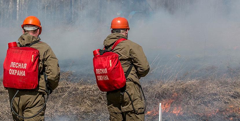 В выходные в Новосибирской области горели леса