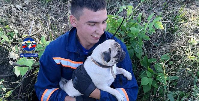 Мопса и кошку пришлось вызволять спасателям в Новосибирске